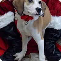 Adopt A Pet :: Cocoa - Lewisburg, TN
