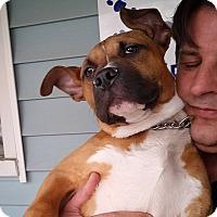 Adopt A Pet :: Popeye - Elyria, OH