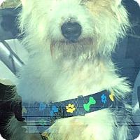 Adopt A Pet :: Patrick - Boulder, CO