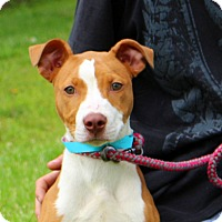 Adopt A Pet :: Bonnie~ meet me! - Glastonbury, CT