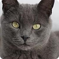 Adopt A Pet :: Jinx - Barnegat, NJ