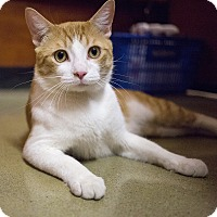Adopt A Pet :: Bounce - Toronto, ON