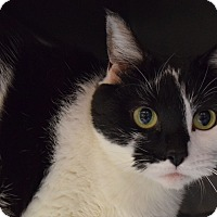 Adopt A Pet :: Astrid - Bay Shore, NY