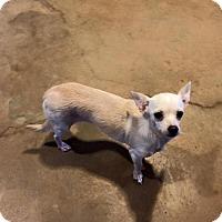 Adopt A Pet :: Rosey - Longview, TX