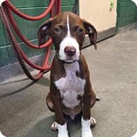 Adopt A Pet :: Zimmer - Alpharetta, GA