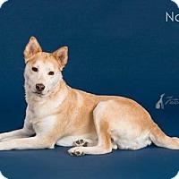 Adopt A Pet :: Nakita - Carrollton, TX