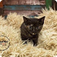 Adopt A Pet :: Cariann - Freeport, NY