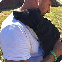 Adopt A Pet :: Bitsy - Harmony, Glocester, RI