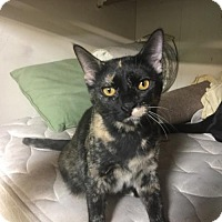 Adopt A Pet :: Tori (XPOST) - Brookeville, MD