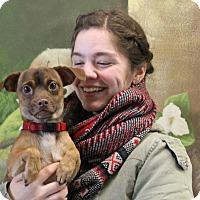 Adopt A Pet :: Hootie - Elyria, OH