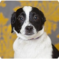 Adopt A Pet :: Forbes - Fort Wayne, IN