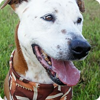 Adopt A Pet :: Mickey - Friendswood, TX