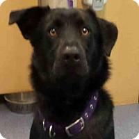 Adopt A Pet :: SWEET PEA - Ukiah, CA