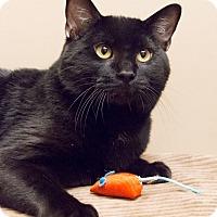 Adopt A Pet :: Travis - Chicago, IL
