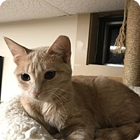 Adopt A Pet :: Sandy - Portland, ME