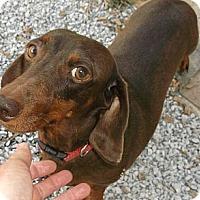 Adopt A Pet :: Bonnie - Georgetown, KY