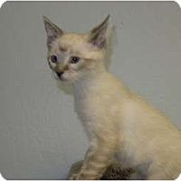 Adopt A Pet :: Tequila - Modesto, CA