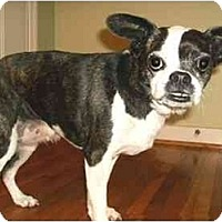 Adopt A Pet :: Abby Gayle - Mooy, AL