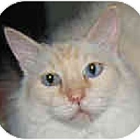Adopt A Pet :: Willow - Dallas, TX