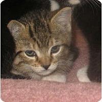 Adopt A Pet :: Andy - Acme, PA