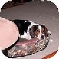 Adopt A Pet :: Rupert - Novi, MI