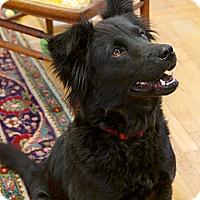 Adopt A Pet :: Truly - Homewood, AL