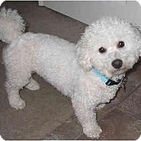 Adopt A Pet :: Riley - La Costa, CA