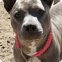 Adopt A Pet :: Athena - Costa Mesa, CA