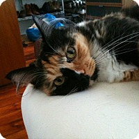 Adopt A Pet :: Mimi - Brooklyn, NY
