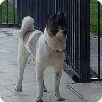Adopt Dog Palm Beach Co