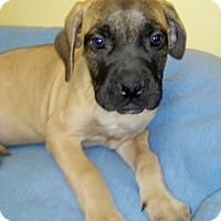 Adopt A Pet :: Malt - Waldorf, MD