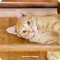 Adopt A Pet :: Archie - Homewood, AL