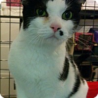 Adopt A Pet :: Bundle - Bonner Springs, KS