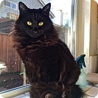 Adopt A Pet :: Joy - Novato, CA