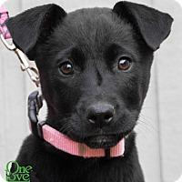 Adopt A Pet :: Hula - Savannah, GA