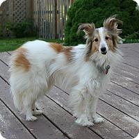 Adopt A Pet :: Kobe - Mission, KS