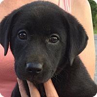 Adopt A Pet :: Elise - Jasper, TN