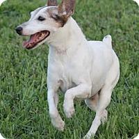 Adopt A Pet :: MISSY - Terra Ceia, FL