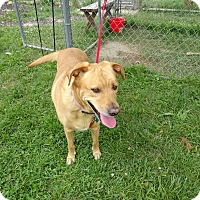 Adopt A Pet :: Lilly - Delaware, OH