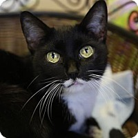 Adopt A Pet :: Ritzy - Kettering, OH