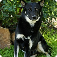 Adopt A Pet :: Scooter - Auburn, CA