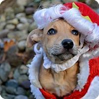 Adopt A Pet :: Della Reese - Pittsburgh, PA