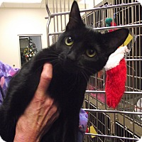 Adopt A Pet :: Courtney - Chambersburg, PA