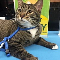 Adopt A Pet :: Tabitha - Olive Branch, MS