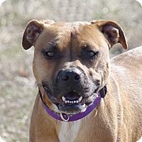 Adopt A Pet :: Mattie - Columbia, IL