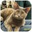 Photo 1 - Domestic Shorthair Cat for adoption in Sacramento, California - Misty W