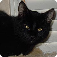 Adopt A Pet :: Salem - Jacksonville, NC