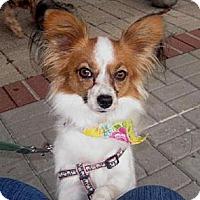 Adopt A Pet :: Penny - Conroe, TX