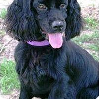 Adopt A Pet :: Rosco - Sugarland, TX