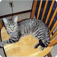 Adopt A Pet :: Sylvia - Modesto, CA